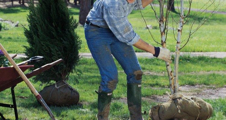 Plantar árboles mejora la calidad del oxígeno y reduce la contaminación acústica de las grandes ciudades.