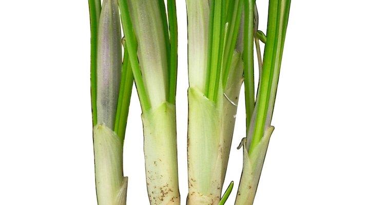 El azafrán y el gladiolo son ambos pastos perennes.