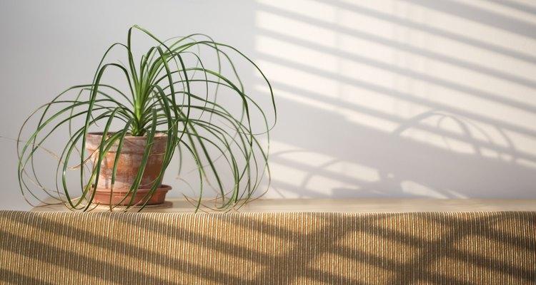 Cuida apropiadamente a la planta después del trasplante.