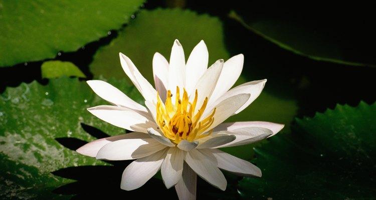 A fotossíntese é o processo vital para a sobrevivência das plantas