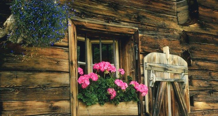 Los geranios son excelentes para interior, exterior o macetas.