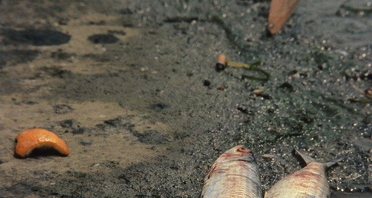 La contaminación de las aguas que finalmente drenan hacia o se conectan con los océanos destruye la vida.