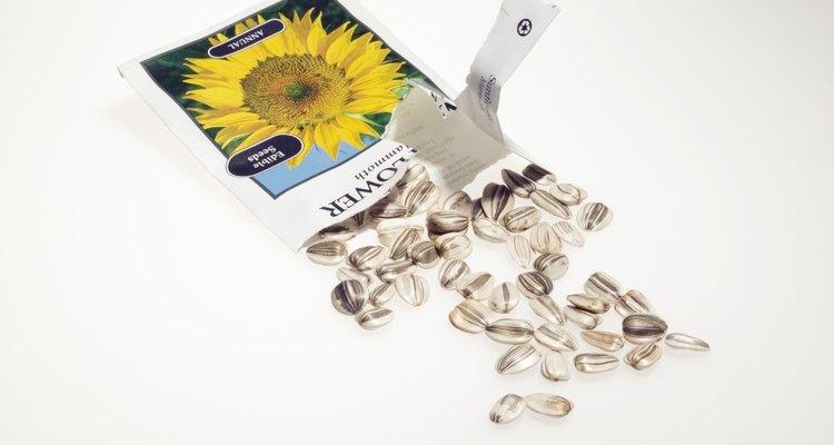 Semillas de girasol.