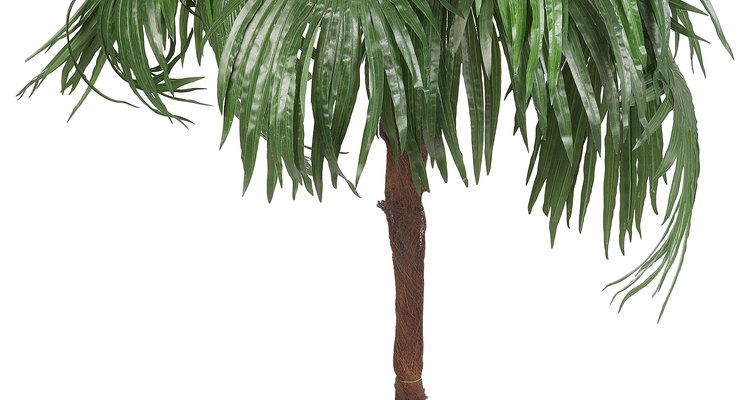 Repot a palm with yellowing leaves.