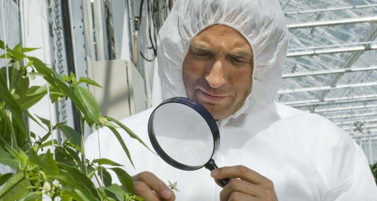 Salarios para científicos agrícolas.
