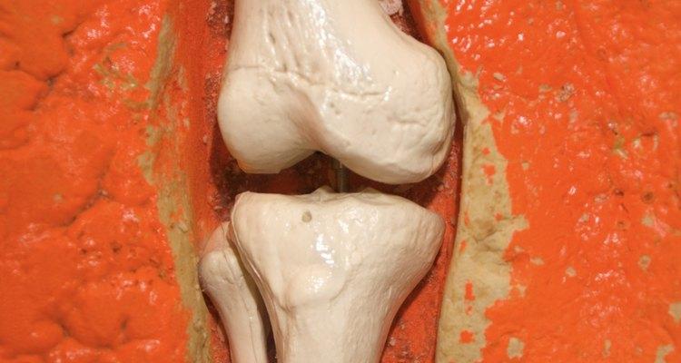 En la articulación de la rodilla encontramos un ejemplo de los ligamentos.