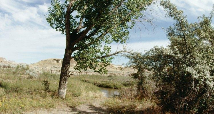 Ciertos árboles prosperan en condiciones de viento.