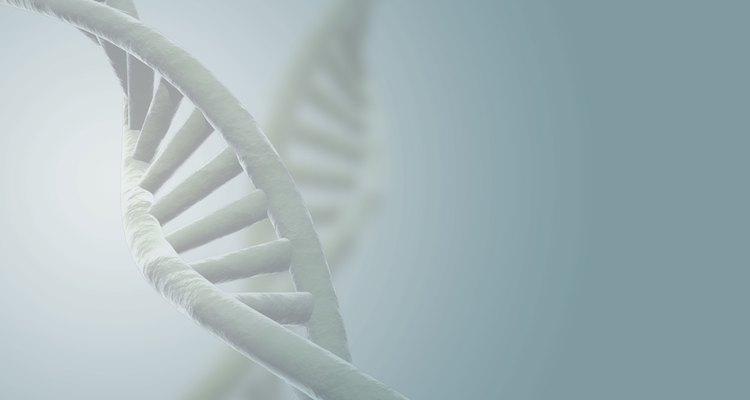 Utilize um palito de dente para retirar o DNA