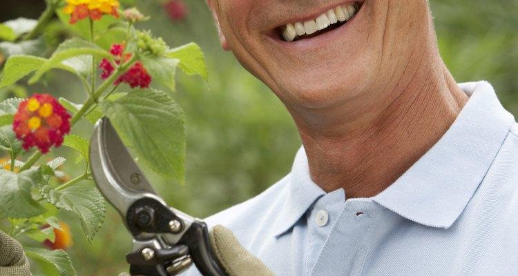 Las tijeras para flores son otro tipo de tijeras de podar que están diseñadas para los tallos delicados de las flores.