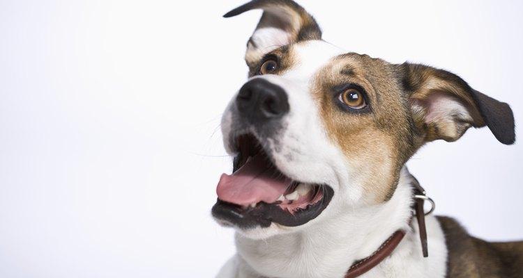É importante saber quais alimentos são saudáveis para o consumo do seu cão