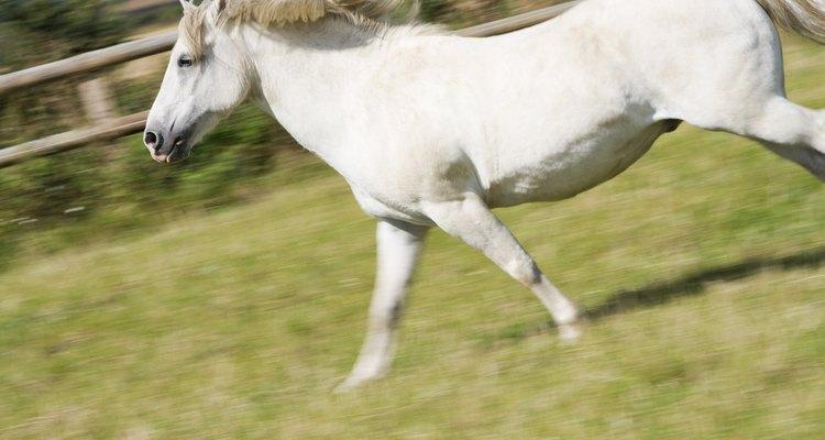 Cuide do seu cavalo para que a distensão muscular não se torne um problema mais sério