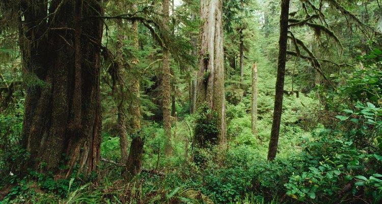 Las selvas tropicales son abundantes en plantas, hasta que son sobreexplotadas o destruidas.