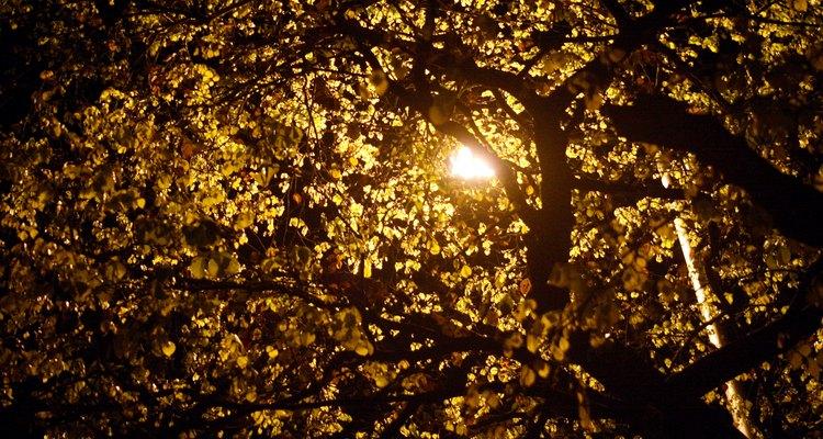 Centroamérica tiene una gran riqueza en árboles.