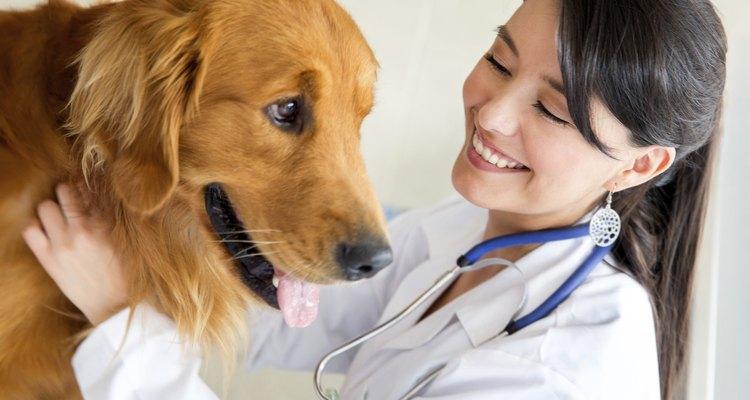 Procure um veterinário