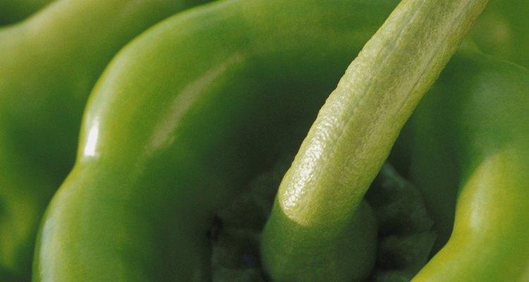 Os pimentões são membros do gênero Capsicum