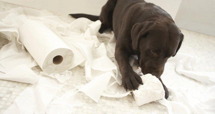A má alimentação pode ser extremamente perigosa para cães
