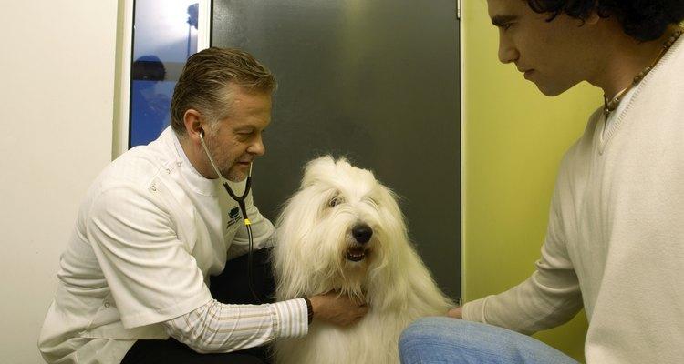Lidiar con los efectos secundarios de prednisona en perros.