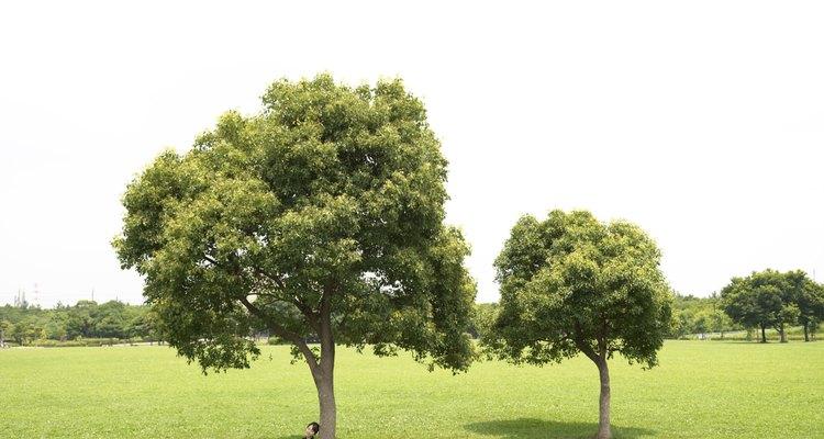 Plantar um bosque pode fornecer reclusão