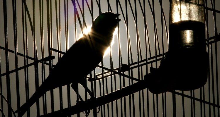 ¿Cuánto tiempo viven los canarios en cautiverio?