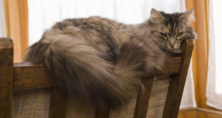 Aprende a eliminar el olor fuerte de la orina de los gatos.