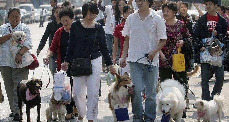 Activistas por los derechos animales.