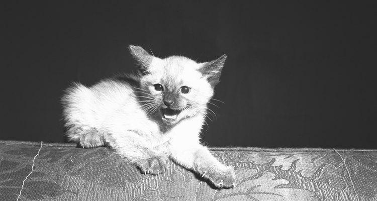Los gatos son una excelente mascota, pero es necesario conocer cómo modificar sus malas conductas.
