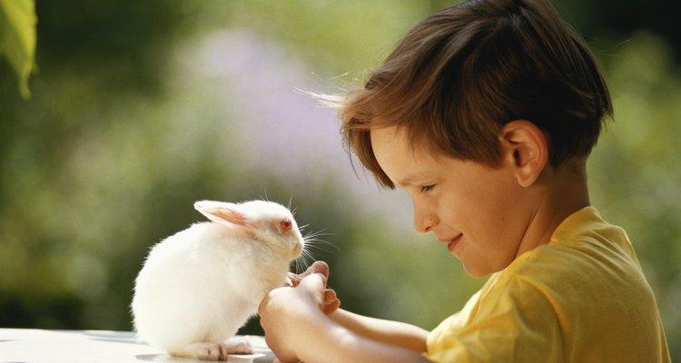 La Biblia contiene versos que hacen alusión a la inclusión de los animales por parte de Dios.