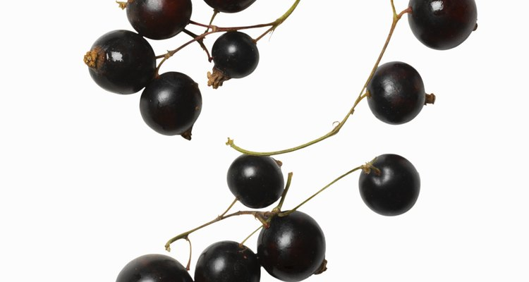 Close-up of a bunch of blackcurrants