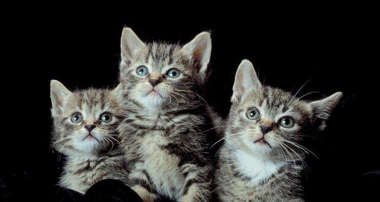 La desparasitación es vital para la salud de tus gatitos.