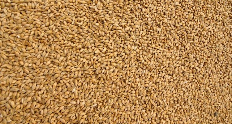 Existem duas variedades de sementes de chia