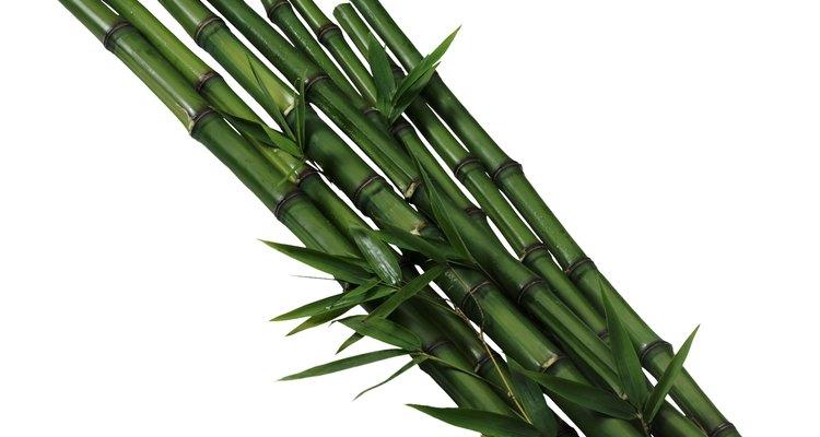 Cómo plantar semillas de bambú moso.