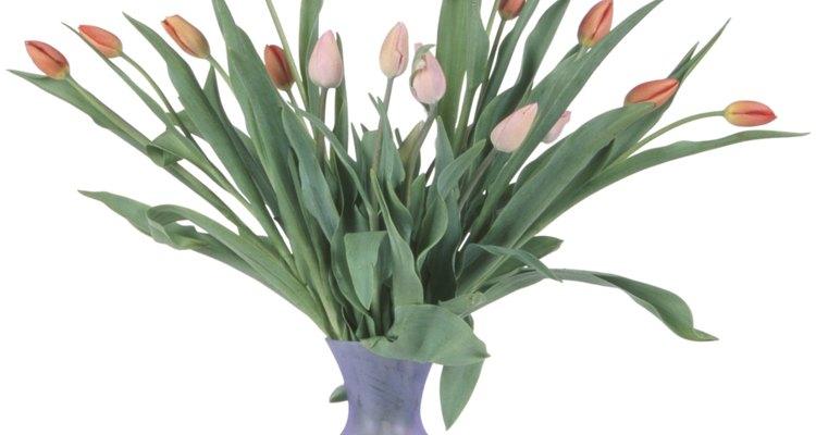 El agua helada ayuda a mantener los tulipanes frescos por más tiempo.
