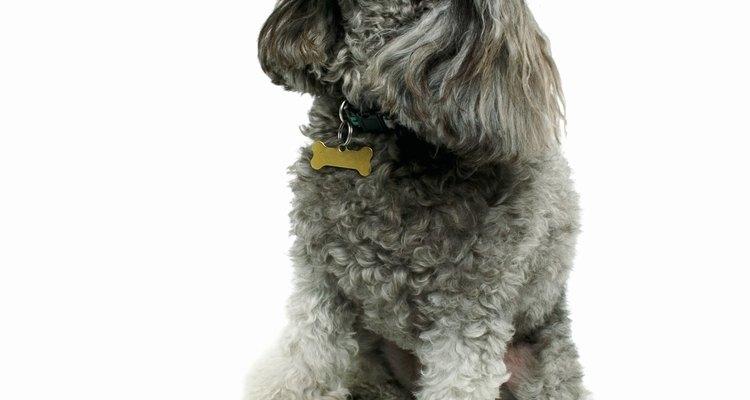 Use uma lâmina curta quando tosar o rosto do seu cão