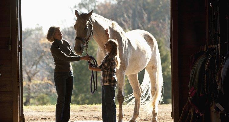 Cavalos podem dar coices porque estão com medo ou ansiosos