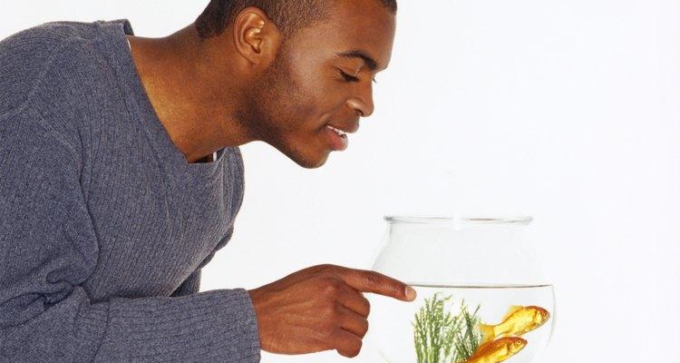 Peixes requerem cuidado também
