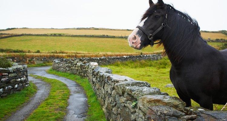 Mantenha as pulgas longe dos cavalos com vinagre