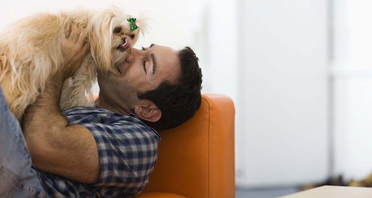Seu cachorro ficará cheiroso!