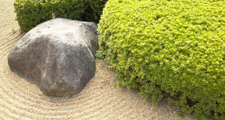 Las rocas son fuentes de minerales para las mariposas.