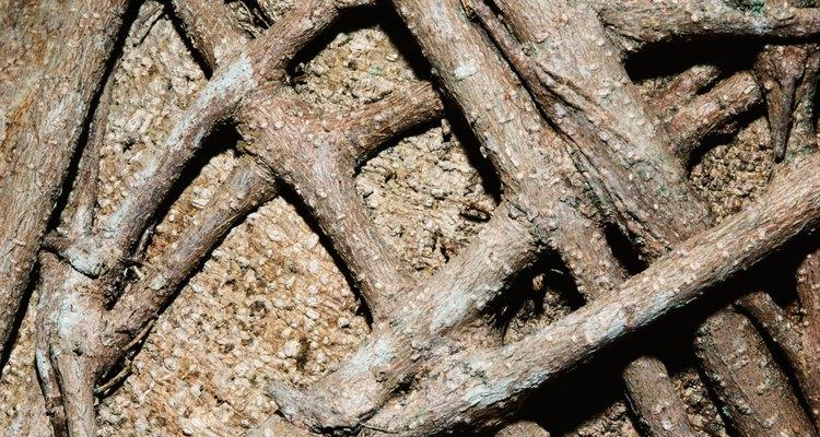 Las raíces de los árboles pueden dañar los cimientos de una casa debilitando la tierra que los sostiene.