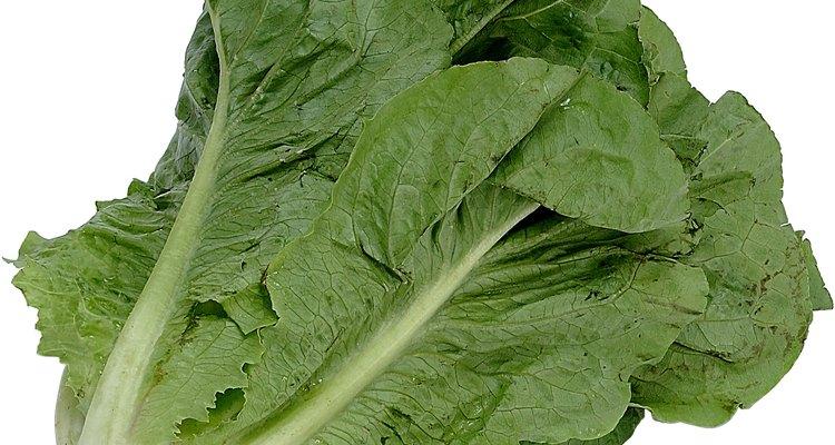 Inspecciona regularmente la lechuga para ver si tienes hojas o manchas amarillas.