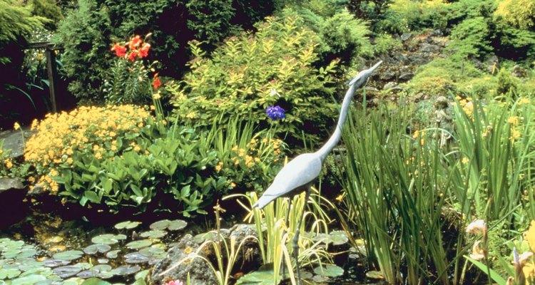 Las plantas acuáticas nativas proporcionan belleza y hábitat.