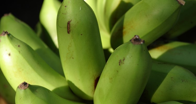 Plantains and bananas are easily mistaken for one another.