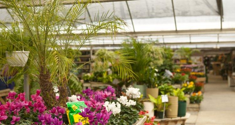 Cultivar flores en un invernadero es la forma más fácil de obtener plántulas.