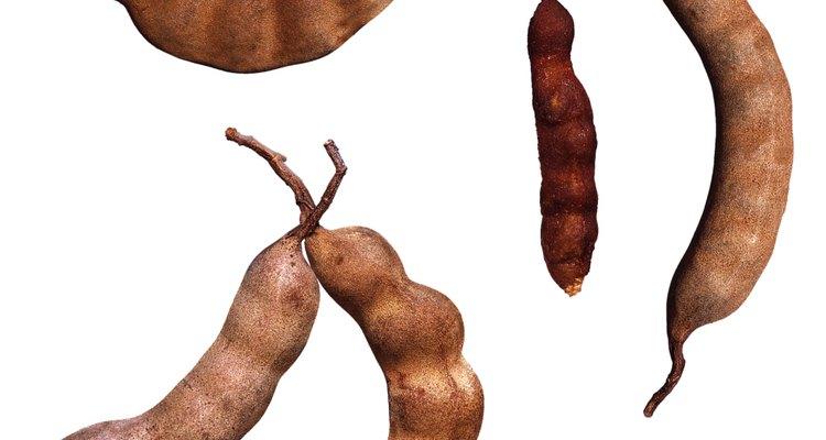 Los arbustos de leguminosas producen vainas de semillas.