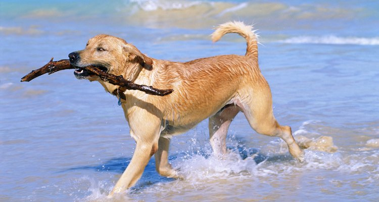 Happy hound: playing with a dog will cheer you up.