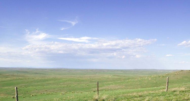 Terrenos abertos podem ser utilizados tanto para a pecuária quanto para a agricultura