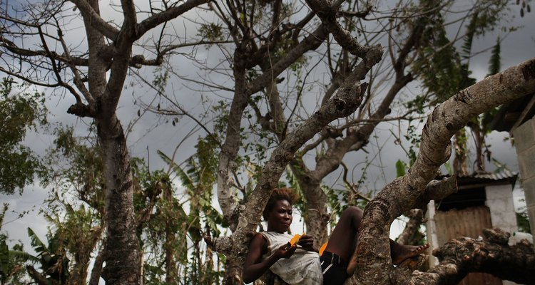 Haitians Live Precarious Existence on DR Agricultural Plantations
