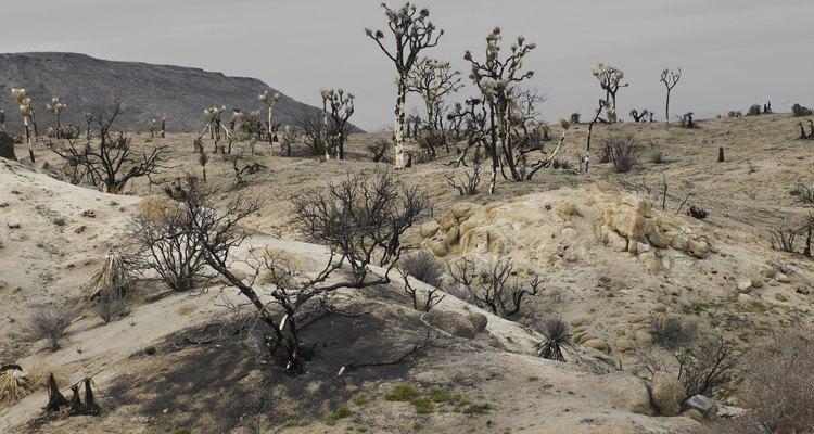 Las ratas canguro habitan en el desierto.