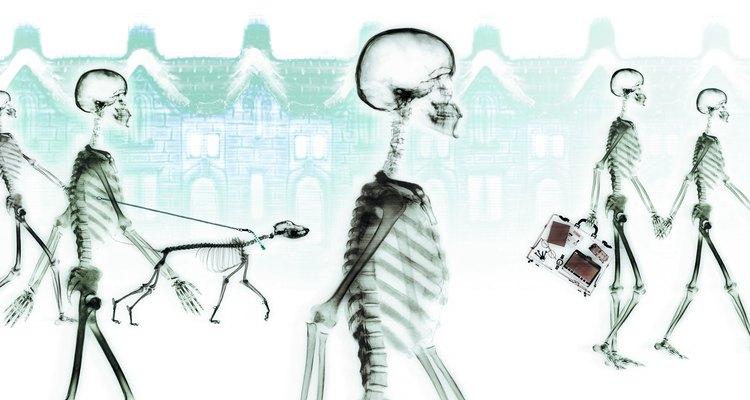As partes básicas de um esqueleto são facilmente replicadas