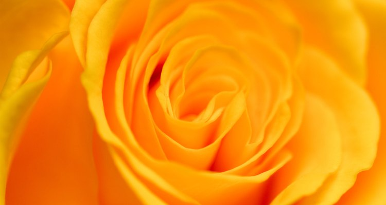 Acentúa con rosas naranjas.